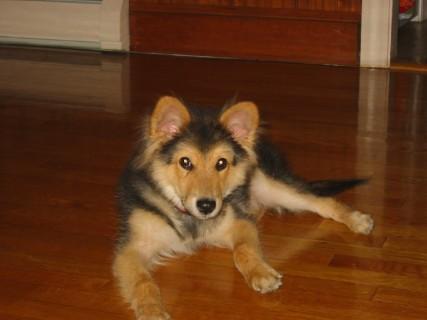 New puppy - 2004